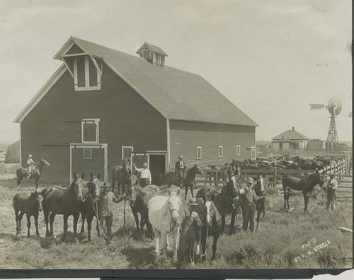 Horses and mules on the Johnson ranch, Haskell County, Kansas - Page