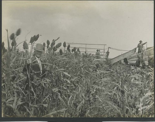 Harvesting kafir corn and loading a header barge - Page