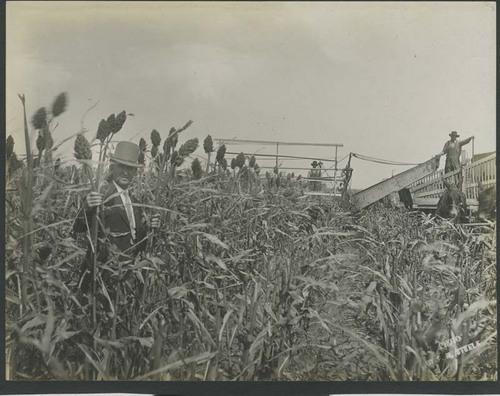 Harvesting kafir corn and loading a header barge - Page
