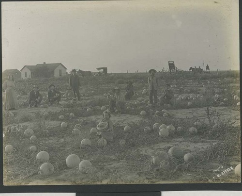 Watermelon crop, Haskell County, Kansas - Page