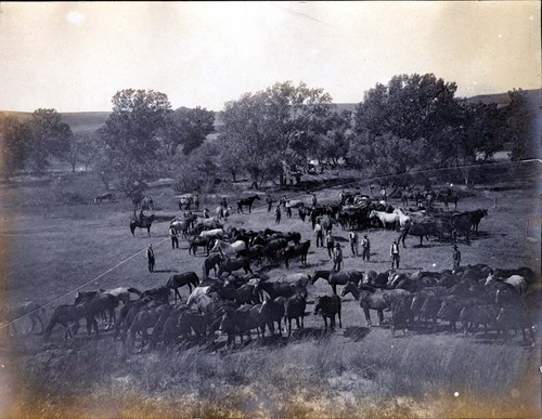 Cowboys and roundup mounts on Dave Fritzlen's ranch in Clark County, Kansas - Page
