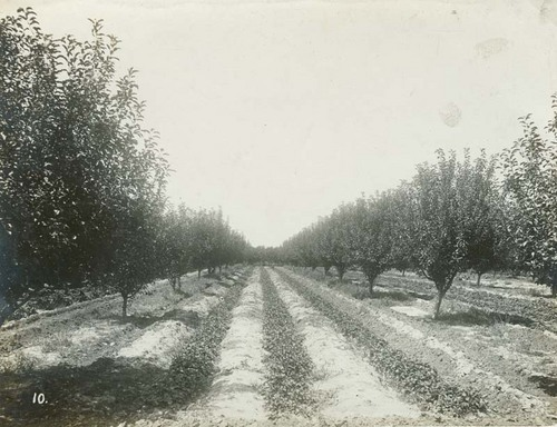 Orchard, Seward County, Kansas - Page