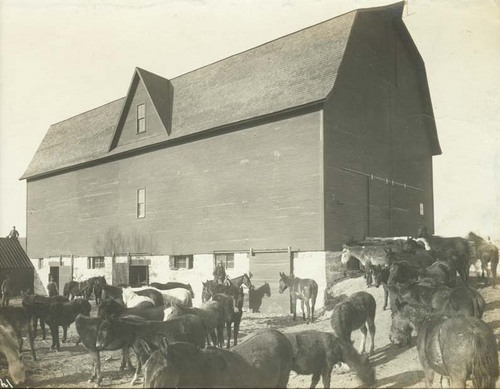 Herd of horses and mules standing next to a large barn - Page