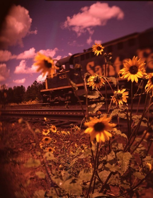 Freight train and sunflowers - Page