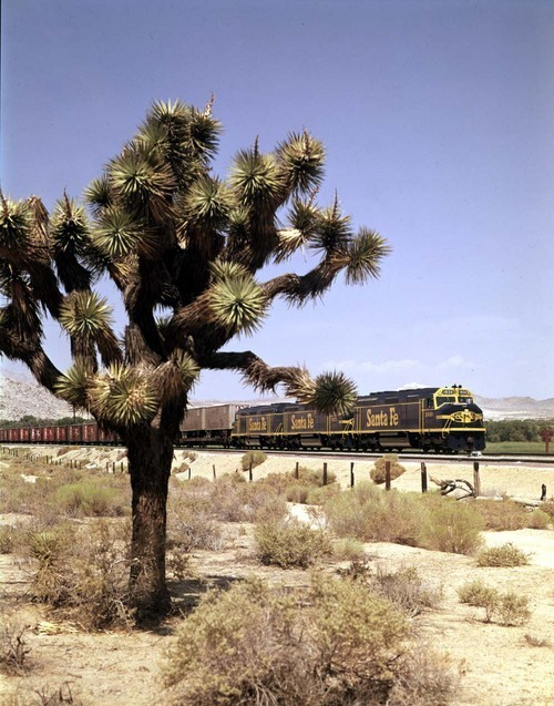 Piggyback train and Joshua Tree cactus, Victorville, California - Page